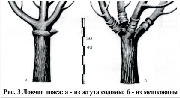 Ловчие пояса из жгута, соломы и мешковины