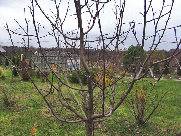 Здоровое дерево
