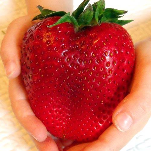 Здоровая ягода садовой земляники