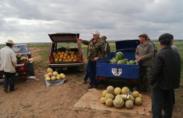 Фермеры - продают вкусные дыни и арбузы на юге Оренбургской области