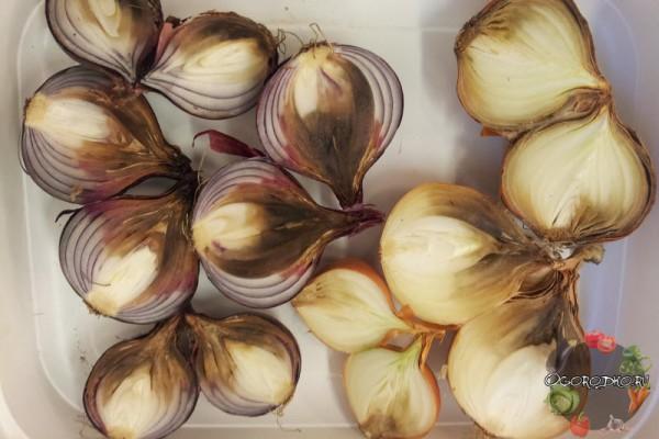 Луковицы, пораженные серой гнилью