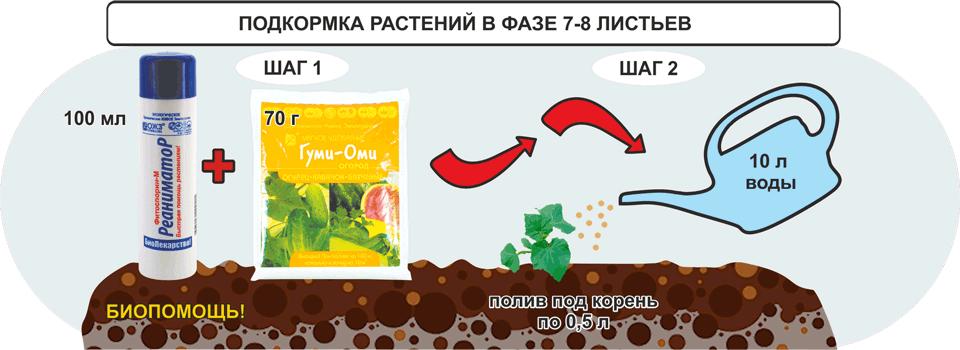 Подкормка растений в фазе 7-8 листьев